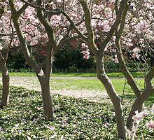 Tree Study 18 The Magnolia by NEKROS