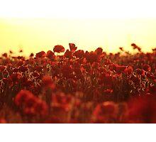 Poppy Sunset Photographic Print