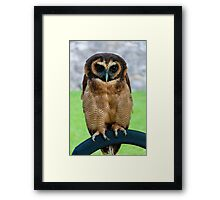 brown wood Owl Framed Print