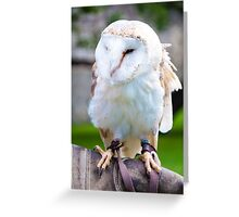 View of Barn owl sitting on falconer glove Greeting Card