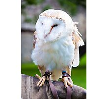 View of Barn owl sitting on falconer glove Photographic Print