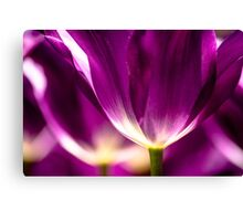 Under a Purple Tulip. Color photo by Wanda Lotus. Canvas Print
