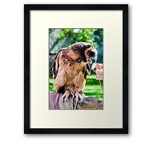 Close up portrait of brown wood Owl sitting on falconer glove Framed Print