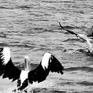 The Pelican and the Sea Eagle by Margaret Stevens