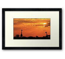 Giraffe - Love of Sunsets - African Wildlife Background Framed Print