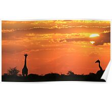 Giraffe - Love of Sunsets - African Wildlife Background Poster