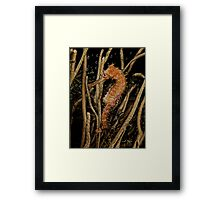 Hippocampus hystrix (Spiny seahorse) -  PICTURE & CARD - IPHONE CASE Framed Print