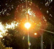 Sunset peaking through the trees! Gotcha! by Princess1222