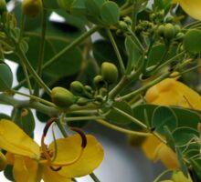 Yellow butterfly bush Sticker