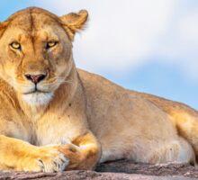 Beautiful Lioness Sticker