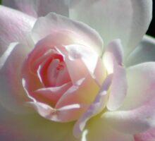 Pinkish rose Sticker