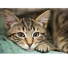Sweet Kitty Photographic Print