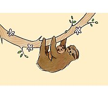 Mama and Baby Sloth Photographic Print