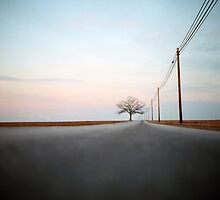 A Lonely Tree on a Long Road by DanielRegner