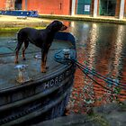 Barge Hound by Andrew Pounder