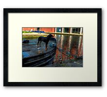 Barge Hound Framed Print