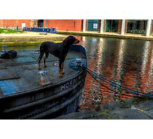 Barge Hound Photographic Print