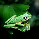 He had his eye on me...or was it a grasshopper? by Scott Mitchell