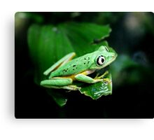 He had his eye on me...or was it a grasshopper? Canvas Print