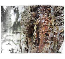 Tree Poster