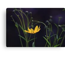 Tracery Flower  Canvas Print