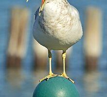 Seagull Sermon by KevinMyron