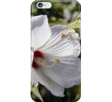 Hibiscus in its Glory iPhone Case/Skin