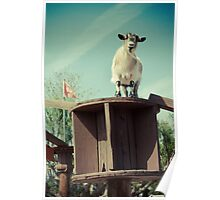 Goat on High Walkway Poster