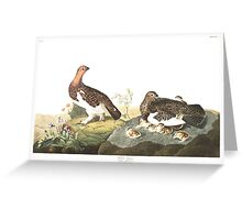 Willow Ptarmigan - John James Audubon Greeting Card