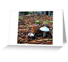 three young mushroom in a clearing among the pine needles Greeting Card