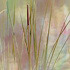 Cattails by CarolM