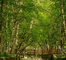 Park Natural serra Estrela - Portugal  by homydesign