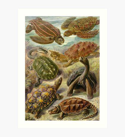 Chelonia - Ernst Haeckel Art Print