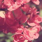 Pink Florals by mallorybottesch
