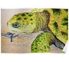 Turtle Love Poster