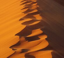 Walking On The Sand Dune by David  Knoll