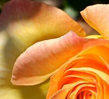Garden Rose Sticker
