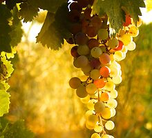 White Zinfandel Grapes by John Hearne