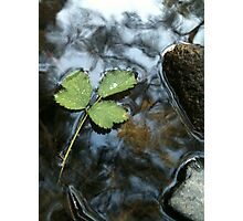 Leaf in Water Photographic Print