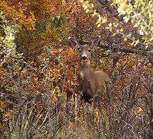 Deer deep in the heart of Garden of the Gods by dfrahm