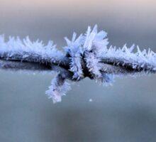 Sharp Frost Sticker