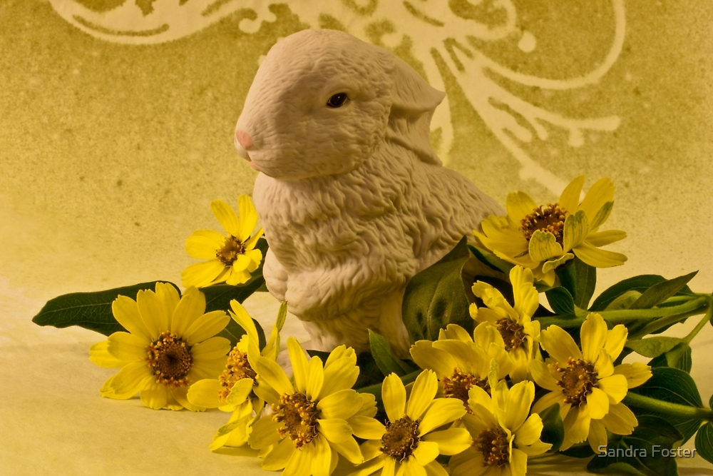 Bunny And Daisies  by Sandra Foster