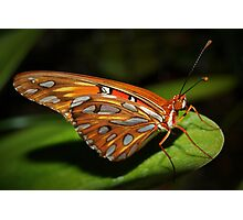 Gorgeous wings Photographic Print