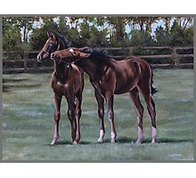 Foal play Photographic Print