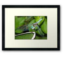 Blue dragonfly with aqua eyes Framed Print