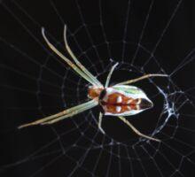 Green garden spider Sticker