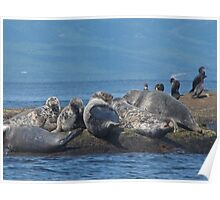 Grey Seals and Cormorants Off the Cabot Trail Poster
