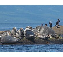 Grey Seals and Cormorants Off the Cabot Trail Photographic Print