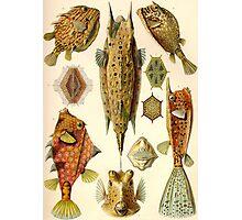 Box Fish- Ernst Haeckel Photographic Print