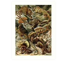 Lizards - Ernst Haeckel  Art Print